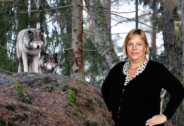 Det finns all anledning att befara att rovdjursattackerna på tamdjur kommer att öka ytterligare, skriver Lena Johansson.
