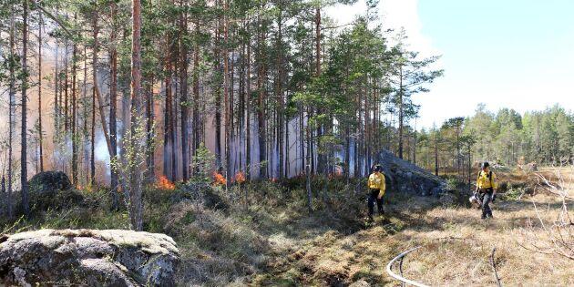 Dags för nya naturvårdsbränningar