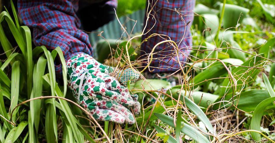 Flitig höstrensning av ogräs ger utdelning i vår!