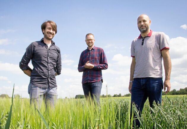 Om studien visar positiva resultat tror Olivier Van Aken, Nick Sirijovski och Essam Darwish att svenska växtodlare kommer att visa intresse för tekniken.