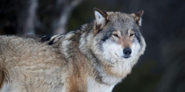 Fem anhållna för jaktbrott – industriledare misstänkt