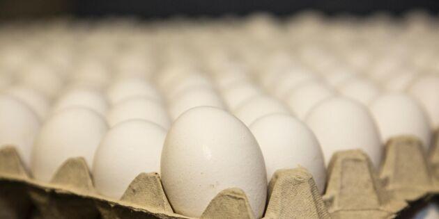 Fågelinfluensan leder till prisras på ägg