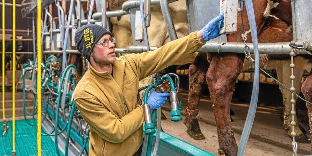 Mjölkroboten får stå tillbaka för mjölkgropen