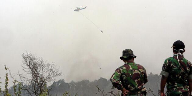 Militären bekämpar indonesiska skogsbränder