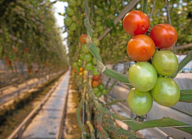 Det har blivit allt svårare att hitta arbetskraft till trädgårdsodlingen, enligt LRF Trädgård.