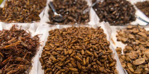 Livsmedelsverket säger nej till kryphål för insekter