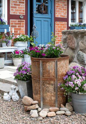 Lösa drivor av sten lagda runt kruksamlingar gör dem till dekorativt sammanhållna grupper. Snabbt och enkelt!