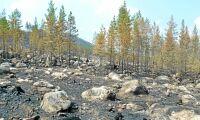 SCA: 600 hektar skog har brunnit ner
