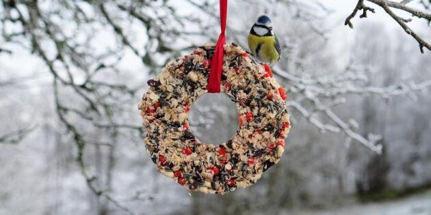 Så enkelt gör du Meggies vackra krans med mat till småfåglarna