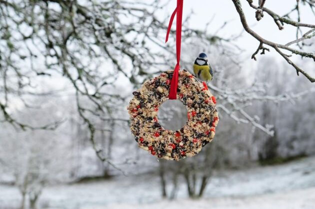Meggie Delic och hennes dotter brukar varje år göra egen fågelmat i en fin krans.