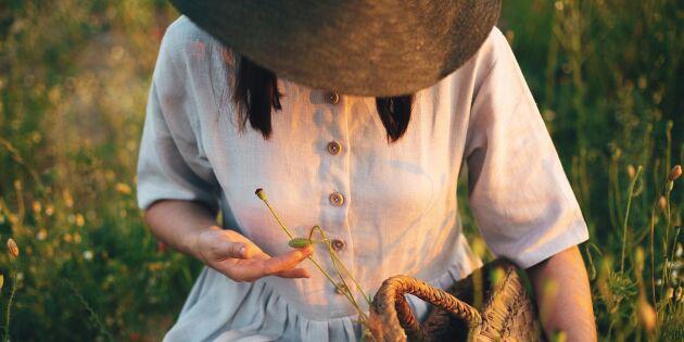 Guide: Allt om lin –vårt vackraste och tåligaste naturmaterial