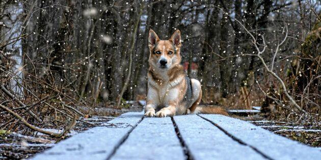 Magisk hundblick vann tävlingen om bästa väderbild