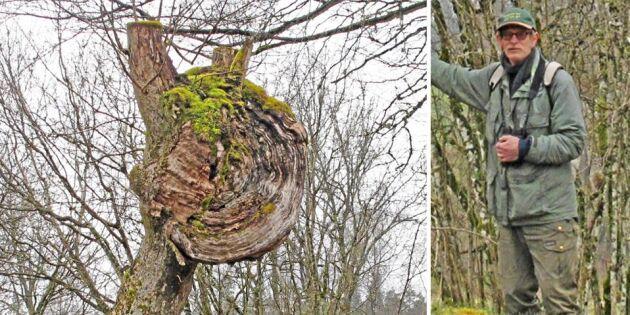 Är detta Sveriges största vril?