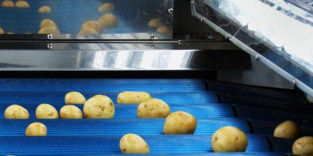 Stor risk för potatisbrist redan i vår