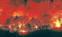 Överraskande rön om skogsbränder