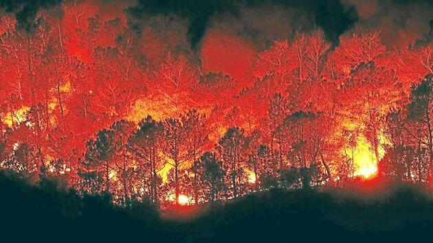 Förlusterna av kol och kväve i marken efter skogsbränder är mycket större än vad forskarna hittills trott.