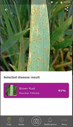 Scouting En mobilbild räcker för att identifiera växtsjukdomar i fält.
