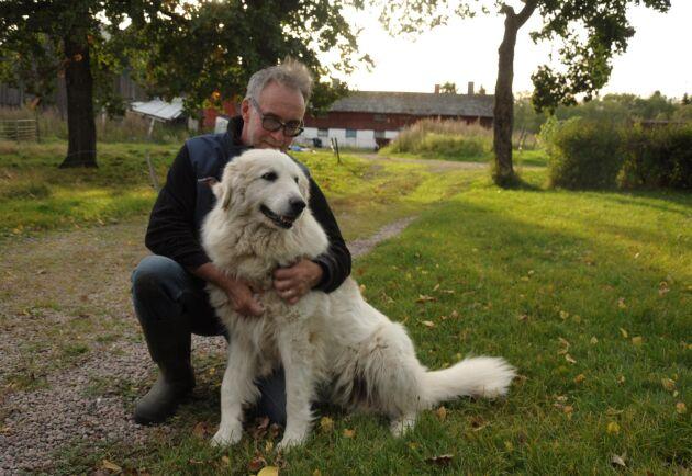 Utan hundarnas hjälp hade de inte kunnat ha kvar fåren, menar Ulf Ekholm. Här med tiken Padrona.