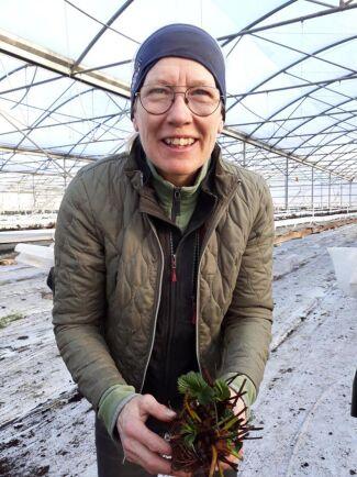Jordgubbsodlaren Eva Axelsson står mitt i både årets plantering och i ansökan om arbetstillstånd för tio säsongsanställda till sommaren.