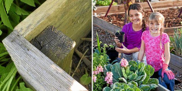 Så bygger du en egen odlingslåda – på en halvtimme