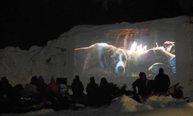 """Över hundra människor kom till den historiska filmkvällen i Gunnarsbyn när filmatiseringen av Jack Londons klassiker """"Skriet från vildmarken"""" visades."""