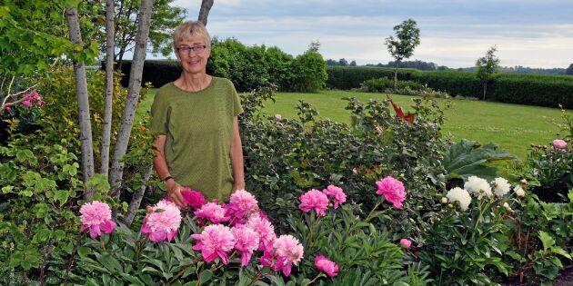 Birgittas paradis: 106 sorters pioner i samma trädgård