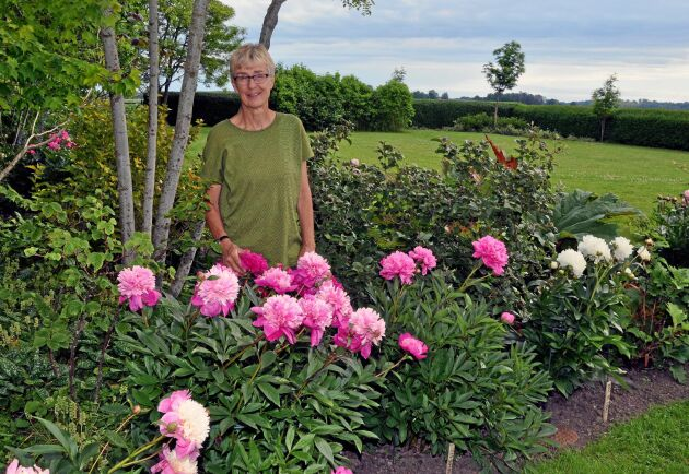 Birgitta Gunnarson bland sina pioner. I trädgården finns hela 106 olika sorter.