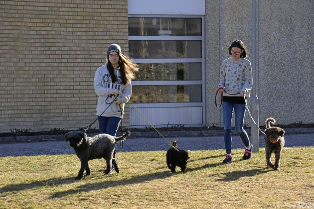 Eleverna går promenader med hundarna dagligen. Linnea Ljunggren och Josefin Lindvall har hand om dagens pass.