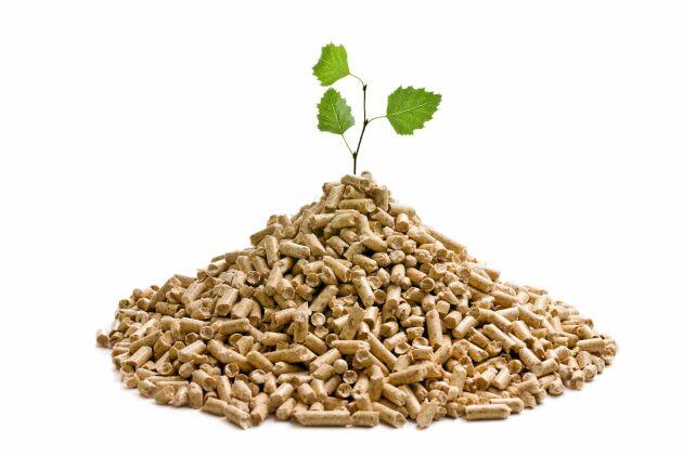Behovet av biomassa kommer att bidra till landsbygdens framtida lyft, enligt Sven-Erik Bucht.