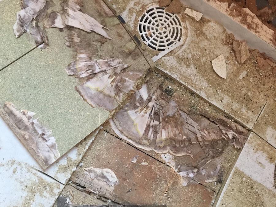 Förruttnelse under badrumsgolvet, när snickaren skulle börja renovera.