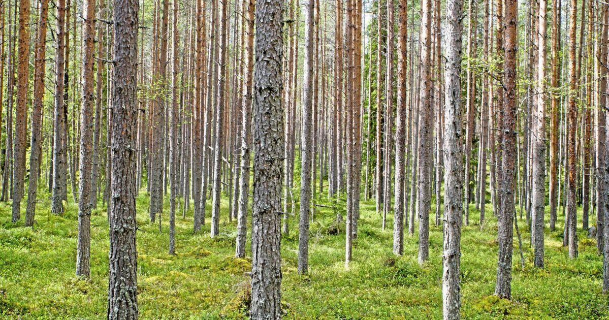 Vilken betydelse har skogshistoriska kunskaper fr - KSLA