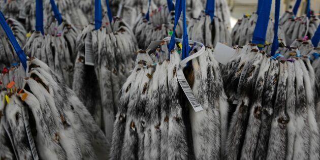 Norsk pälsdjurnäring politiskt bondeoffer
