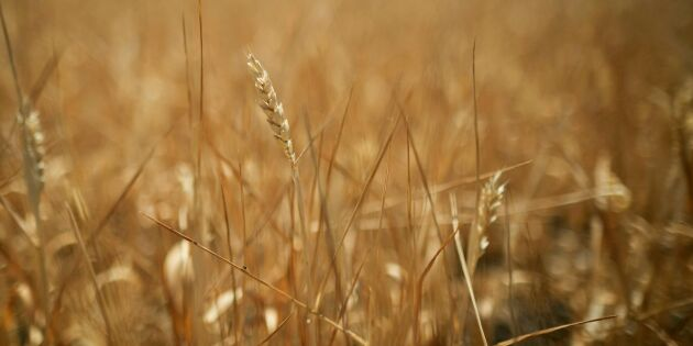 Halv miljard i stöd för bönder hålls inne