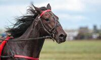 Miljonsmäll för hästuppfödare