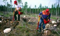 Skogsstyrelsen ska jobba med flyktingbarn