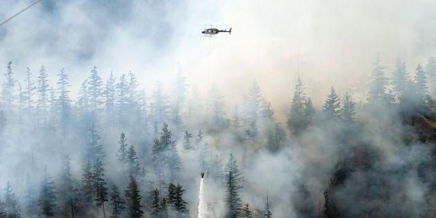 Skogsarbete stoppas efter ökad brandrisk