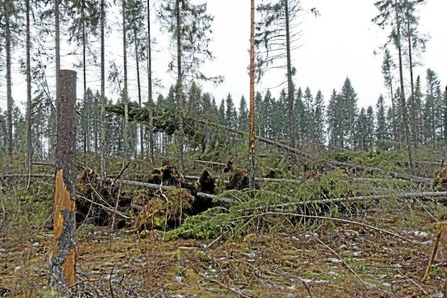 Stormen Ivar fällde 8 miljoner kubikmeter skog 2013