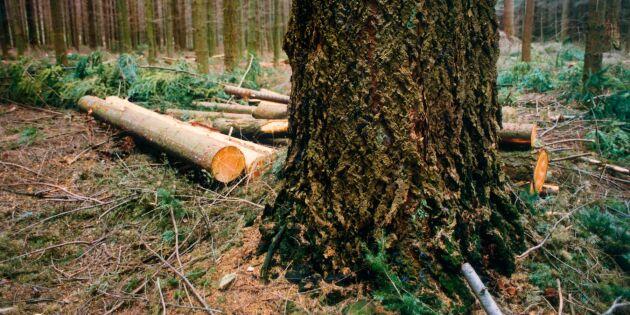 Forskare kritiska till FSCs syn på främmade trädslag