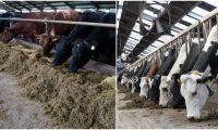 Här är världens tio största mjölkproducenter