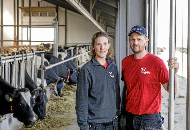 För snart två år sedan tog Lena och Niclas Stang sitt nya lösdriftsstall i bruk. Genom att fortsätta använda det gamla uppbundna stallet kan de maximera antalet mjölkande kor.