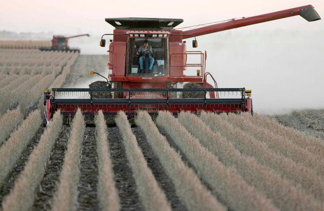 Rysk export av sojabönor till Kina har tiofaldigats under de senaste fyra åren.