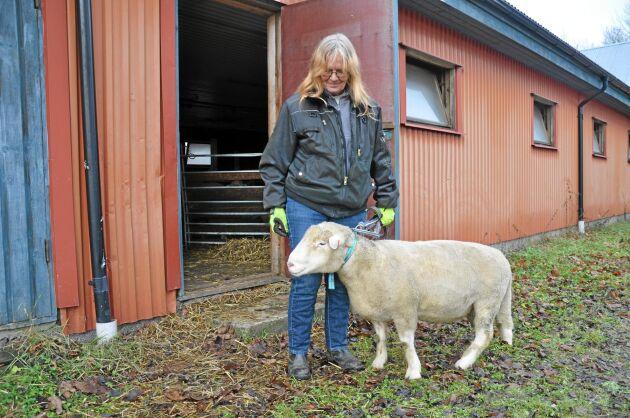 Fårproducent. Anne-Li Gullstrand har 195 lammande tackor som brukar ge runt 300 lamm per år i Härlunda utanför Skara. När Anne-Li Gullstrand för en tid sedan var och handlade på det största snabbköpet i Skara såg hon att det saknades svenskt lamm köttdisken. Trots att de flesta svenska lammen slaktas just på hösten. – Jag skickade ett mejl och ifrågasatte varför det bara fanns importkött där. Efter två dagar fick jag svar, och de gav mig rätt. Nu har de svenskt lammkött igen, säger Anne-Li Gullstrand.