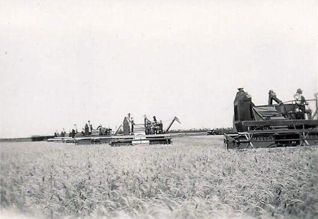 Några av de 500 självgående skördetröskor som revolutionerade jordbruket i USA för 75 år sen.