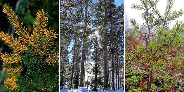 Norra Norrlands framtidsskogar mår dåligt