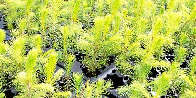 Press att plantera – annars hotar miljonförlust