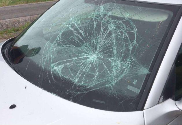 Minkuppfödare krossade rutan på aktivisternas bil. Aktivisterna misstänks i sin tur för skadegörelse och olaga intrång.¬