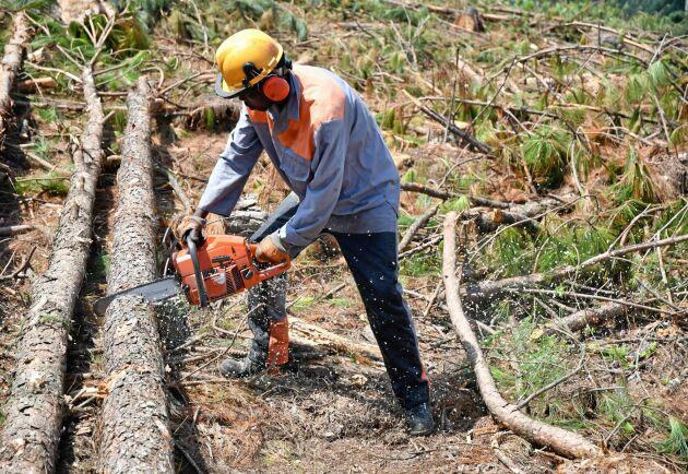 Sydafrikas skogsnäring hävdar att man bidrar till samhällsekonomin genom att skapa arbetstillfällen och exportinkomster.