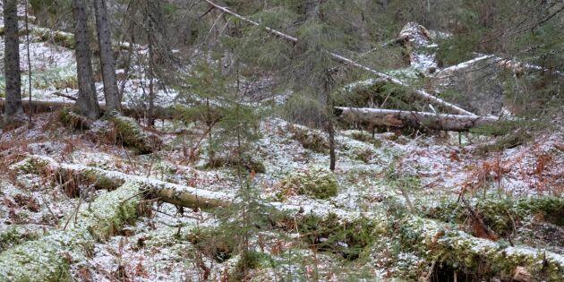 Totalstopp för formellt skydd av skog