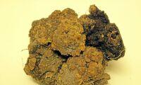 Potatiskräfta har upptäckts i Blekinge