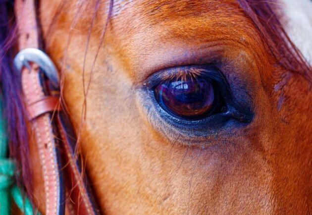 Ekvint coronavirus har tvingat fler ridanläggningar att stänga i Dalsland.